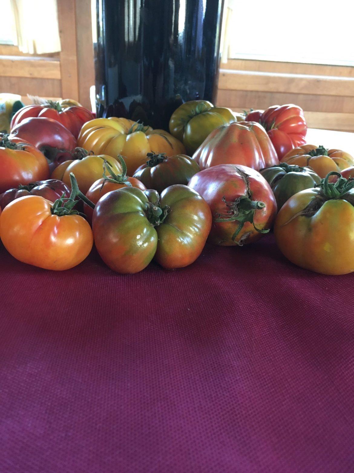 La tomate dans tous ses états.